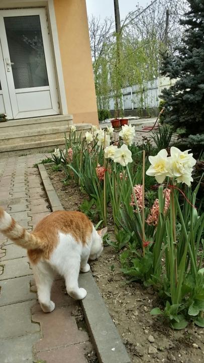 Simba inspecting the new garden
